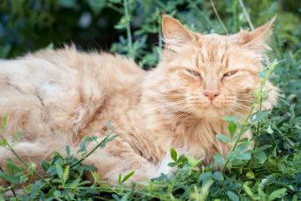Telltale Signs an Old Cat Is Dying