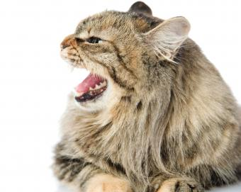 Symptoms of Cat Rabies You Should Never Ignore