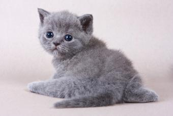 Dealing With a Kitten With a Bad Odor
