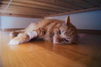 6 Symptoms of a Dying Cat