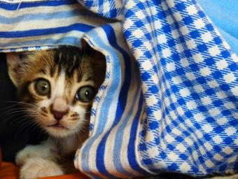 Reassuring a Kitten That Won't Come Out of Hiding