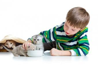 coaxing kittens