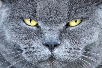 Male Cat Behavior Characteristics
