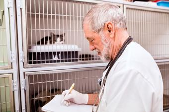 vet filling out documents
