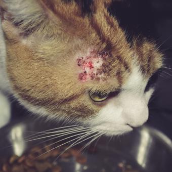 https://cf.ltkcdn.net/cats/images/slide/221282-850x850-catwithallergy.jpg