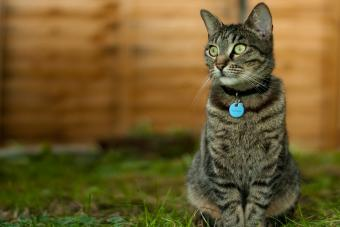GPS Pet Tracking Systems for Cats