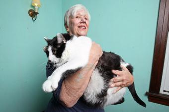 Biggest Cat in the World