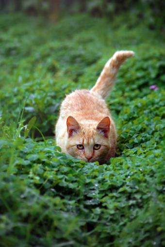 Cat Crouching