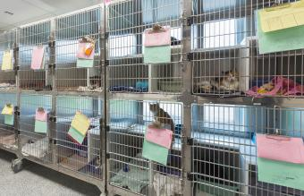 Kitten sitting in cages at animal shelter