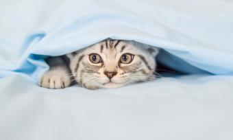 Can Cats Carry Bed Bugs?