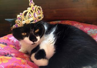 150 Purrfect Cat Pun Names for Your Kitty
