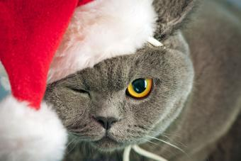Santa Claws cat winking