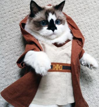 Albert Baby cat dressed as Jedi Knight