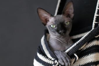https://cf.ltkcdn.net/cats/images/slide/233287-850x567-hairless-cat-in-bag.jpg