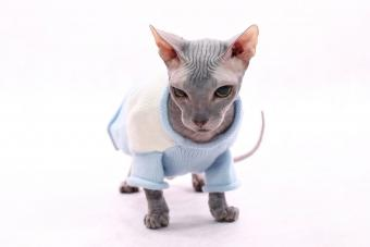 https://cf.ltkcdn.net/cats/images/slide/233298-850x567-sphynx-cat-in-sweater.jpg