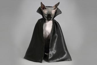 https://cf.ltkcdn.net/cats/images/slide/233299-850x567-Count-Catula.jpg