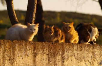 How to Humanely Get Rid of Feral Cats