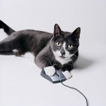 https://cf.ltkcdn.net/cats/images/slide/234771-850x850-4-cat-mouse.jpg
