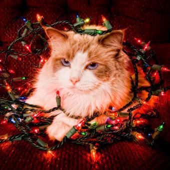 https://cf.ltkcdn.net/cats/images/slide/234773-850x850-6-cat-christmas-lights.jpg