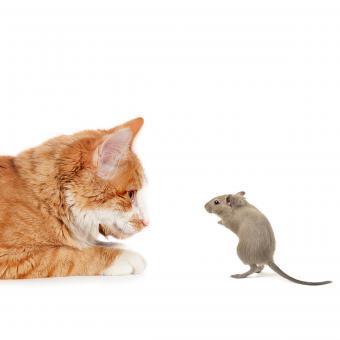 https://cf.ltkcdn.net/cats/images/slide/234774-850x850-7-mouse-catches-cat.jpg
