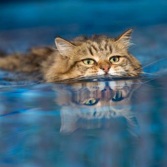 https://cf.ltkcdn.net/cats/images/slide/234775-850x850-8-cat-swimming.jpg