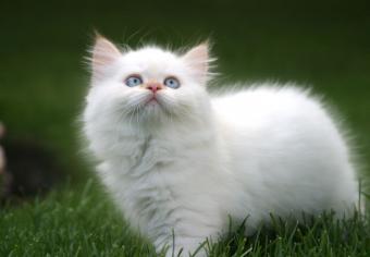 https://cf.ltkcdn.net/cats/images/slide/235031-850x590-domestic-long-hair-cat.jpg
