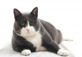 https://cf.ltkcdn.net/cats/images/slide/235042-850x590-Domestic-Shorthair-Cat.jpg