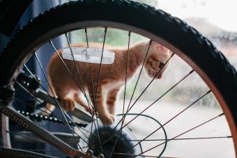 Name after bicycle parts and manufacturers