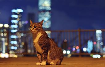 Stray Cat Feeding and Care