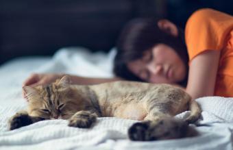 Common Questions About Elderly Cat Behavior