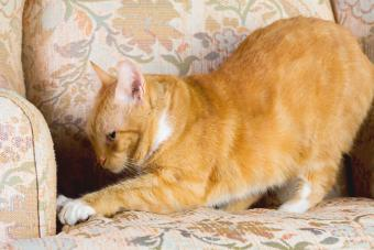 How to Make Homemade Cat Repellents