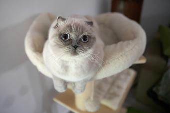 Cat resting in a cat tree