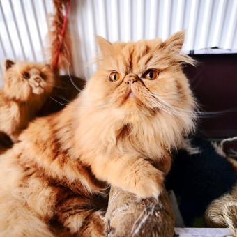 https://cf.ltkcdn.net/cats/images/slide/242139-850x850-copper.jpg