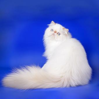 https://cf.ltkcdn.net/cats/images/slide/242146-849x850-lush.jpg
