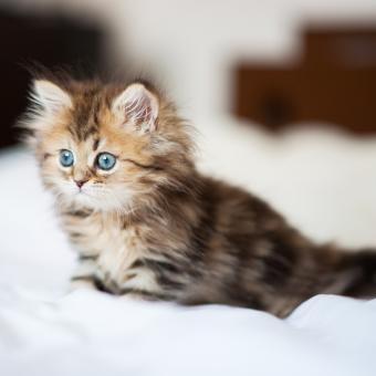 https://cf.ltkcdn.net/cats/images/slide/242149-850x850-kitten.jpg
