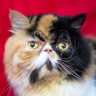 https://cf.ltkcdn.net/cats/images/slide/242150-850x850-cat-in-red.jpg