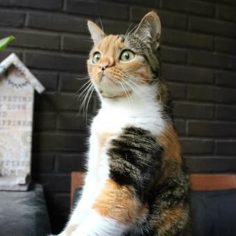 https://cf.ltkcdn.net/cats/images/slide/242620-850x850-8-unusual-markings.jpg