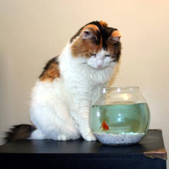 https://cf.ltkcdn.net/cats/images/slide/242632-850x850-13-calico-cats.jpg