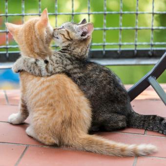 https://cf.ltkcdn.net/cats/images/slide/242634-850x850-9-funny-kittens.jpg