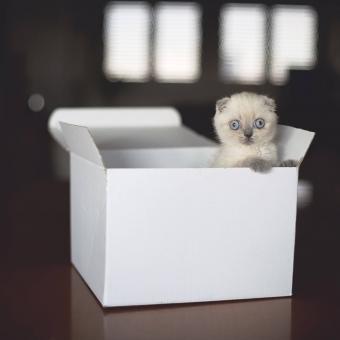 https://cf.ltkcdn.net/cats/images/slide/242637-850x850-12-funny-kittens.jpg