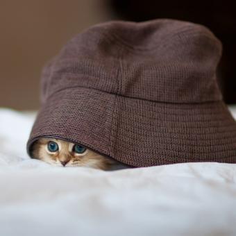 https://cf.ltkcdn.net/cats/images/slide/242639-850x850-14-funny-kittens.jpg