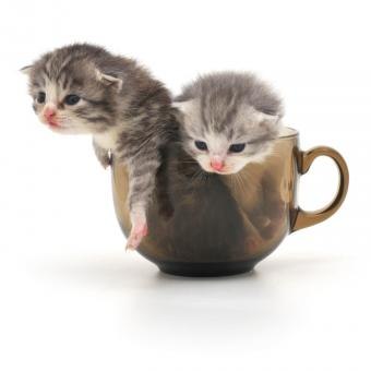 https://cf.ltkcdn.net/cats/images/slide/242642-850x850-6-funny-kittens.jpg