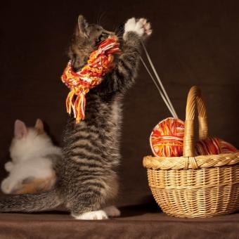 https://cf.ltkcdn.net/cats/images/slide/242644-850x850-4-funny-kittens.jpg