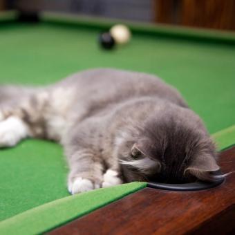 https://cf.ltkcdn.net/cats/images/slide/242645-850x850-3-funny-kittens.jpg