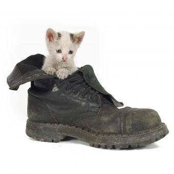 https://cf.ltkcdn.net/cats/images/slide/242646-850x850-2-funny-kittens.jpg