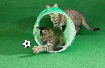 15 Unique Cat Toys Your Feline Friend Will Love