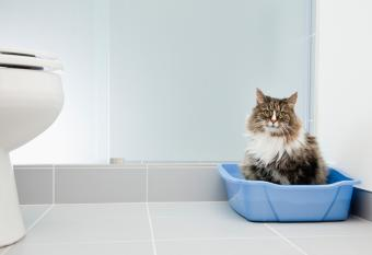 Cat sitting in blue litter box