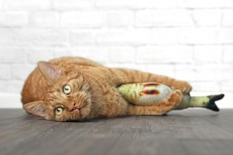 Ginger cat with toy fish