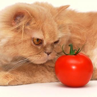 https://cf.ltkcdn.net/cats/images/slide/243241-850x850-5-smells-cats-hate.jpg