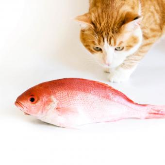 https://cf.ltkcdn.net/cats/images/slide/243242-850x850-4-smells-cats-hate.jpg